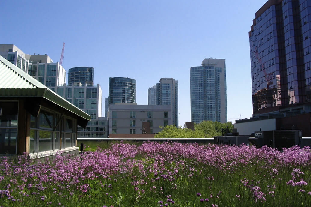 Fire Safety for Green Roofs
